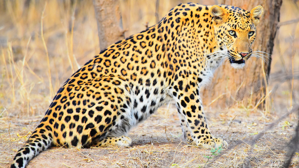 Mingle with the spotted cats at Jhalana Leopard Conservation Reserve