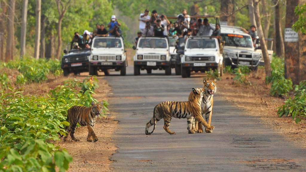 A safari adventure at Bassi Wildlife Sanctuary