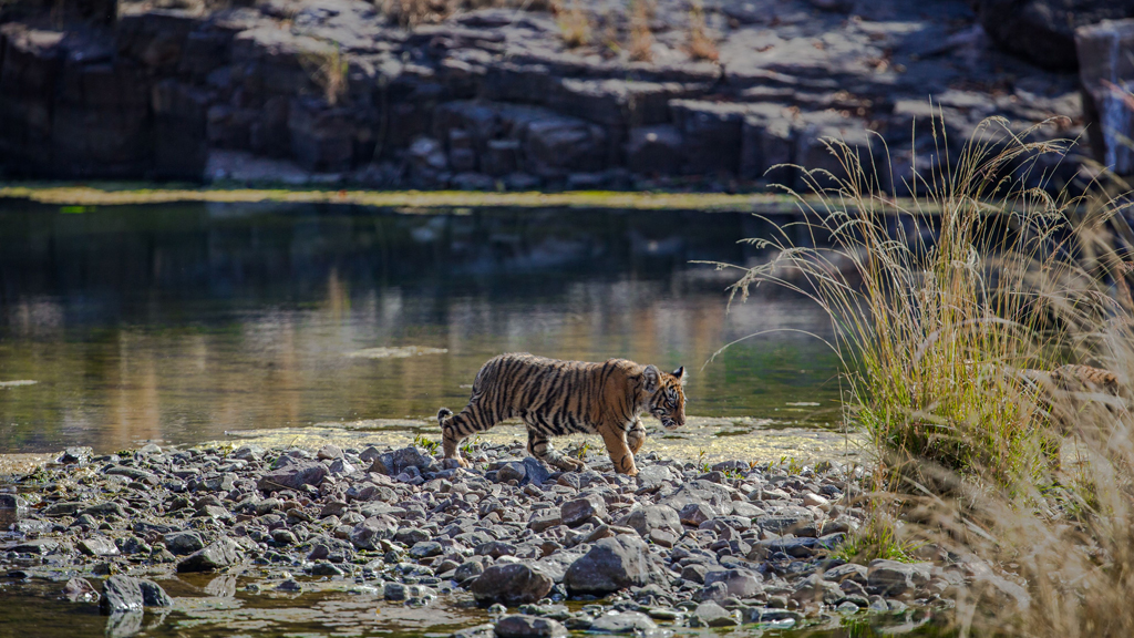 Visit the watering holes of Ranthambore